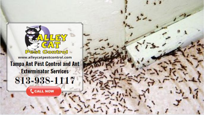 Ants Pest Control Riverview